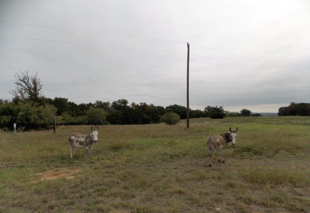 Sold Property | 9207 Wolf Hollow Court Granbury, Texas 76048 25
