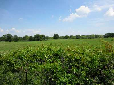 Sold Property   176 County Road 3525  Paradise, Texas 76073 18