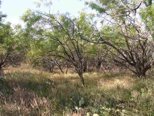 Sold Property | Lot 9 County Road 211  Brookesmith, Texas 76827 1