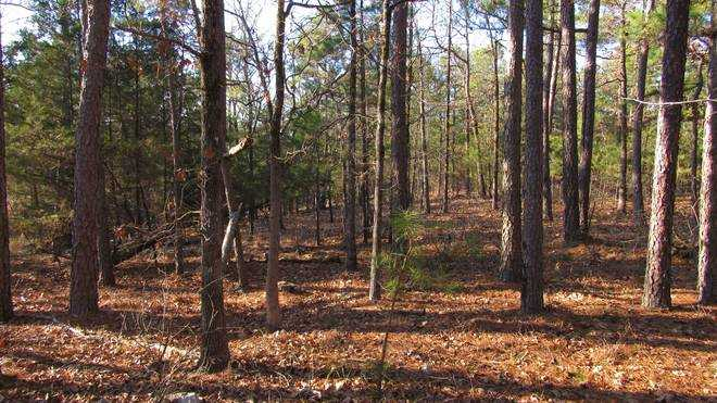 Pending | Willys Circle - Kiamich Wilderness Moyers, OK 74557 14