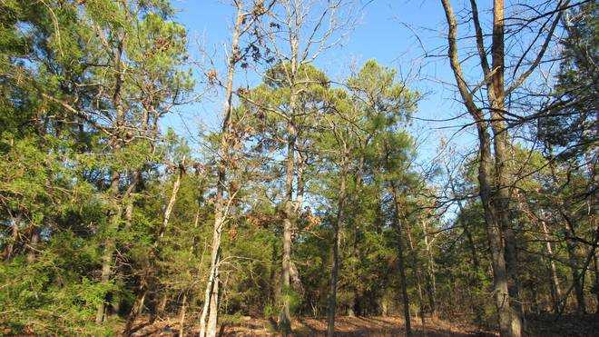 Pending | Willys Circle - Kiamich Wilderness Moyers, OK 74557 15