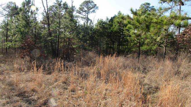 Pending | Willys Circle - Kiamich Wilderness Moyers, OK 74557 3