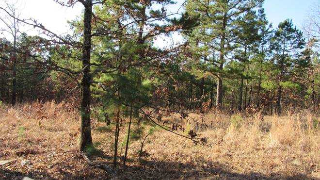 Pending | Willys Circle - Kiamich Wilderness Moyers, OK 74557 4