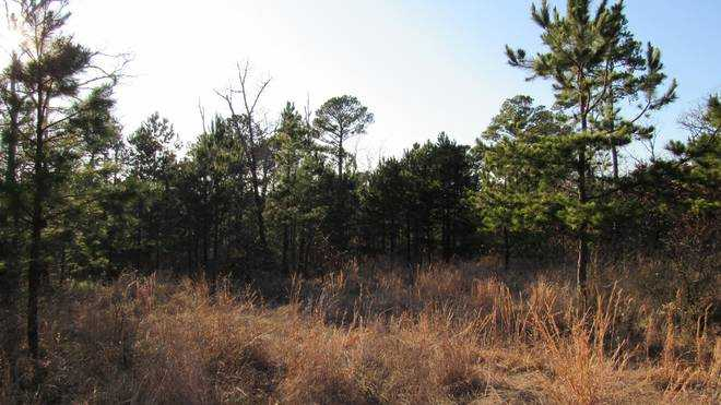 Pending | Willys Circle - Kiamich Wilderness Moyers, OK 74557 5