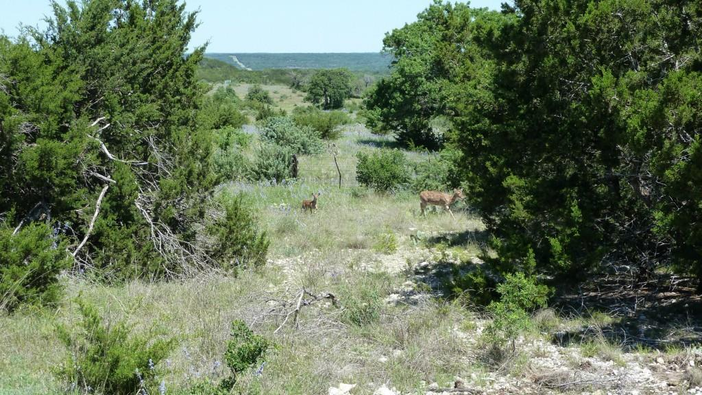 Sold Property | 4500 County Rd 108 Lampasas, TX 76550 3