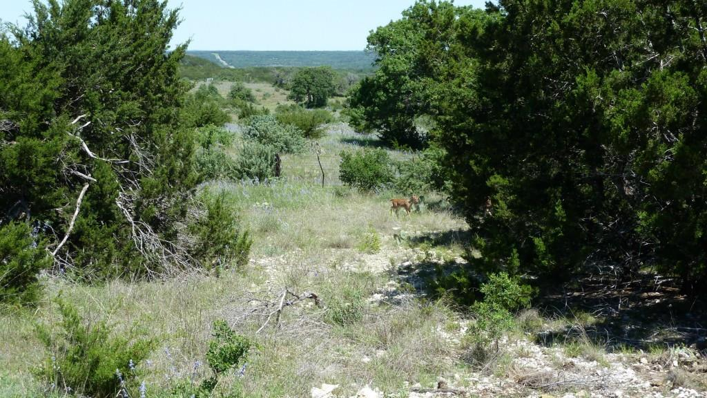 Sold Property | 4500 County Rd 108 Lampasas, TX 76550 4