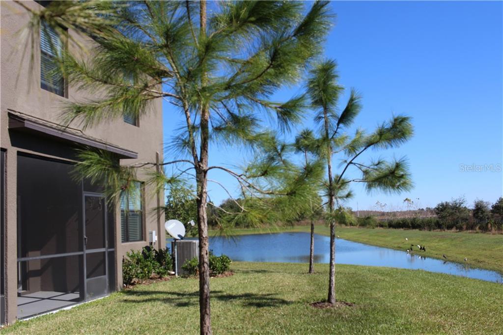 Sold Property | 3280 GENTLE DELL  COURT WESLEY CHAPEL, FL 33543 7