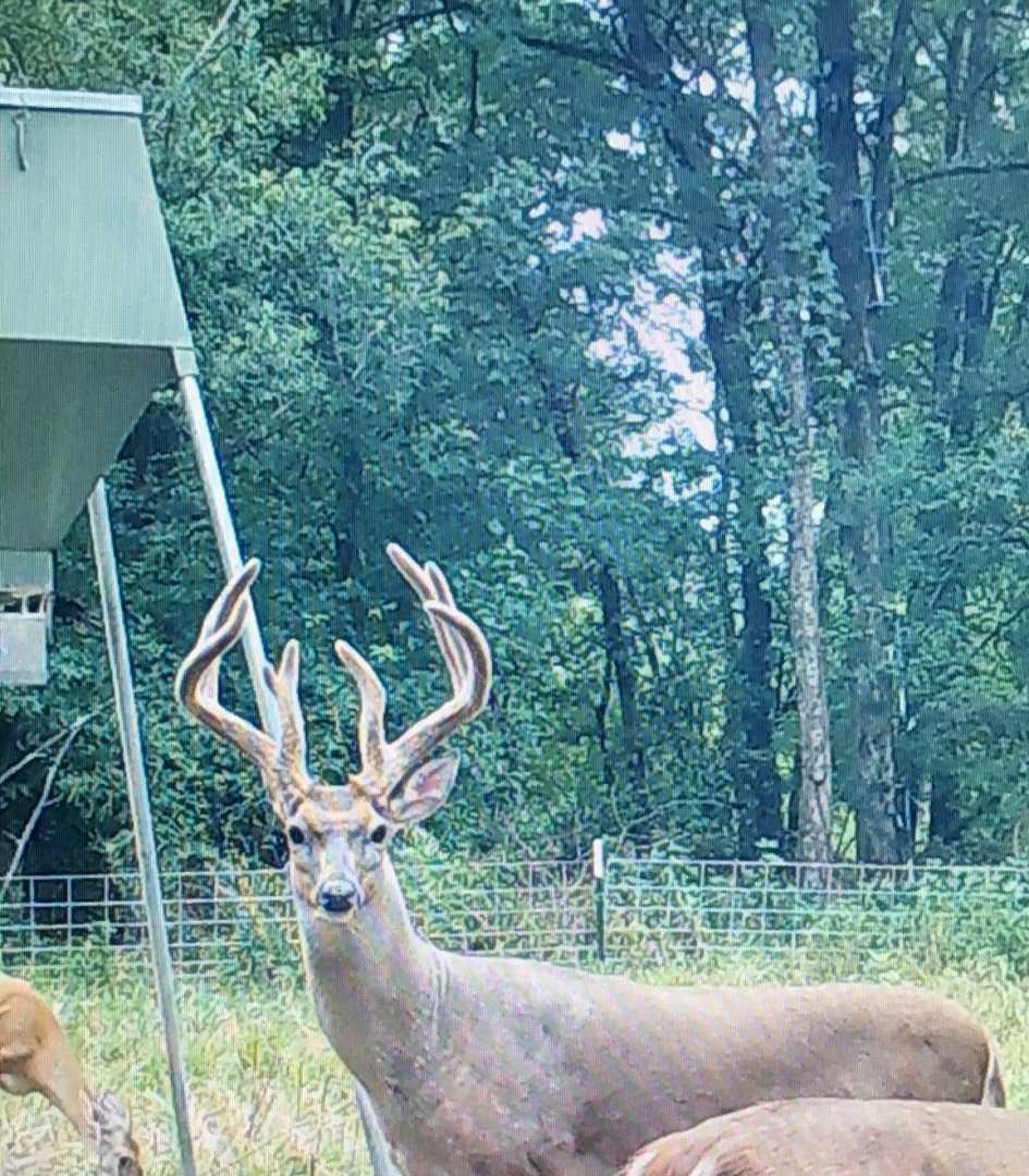 Active   Rut And Strut Hunting Ranch Bentley, OK 74525 15