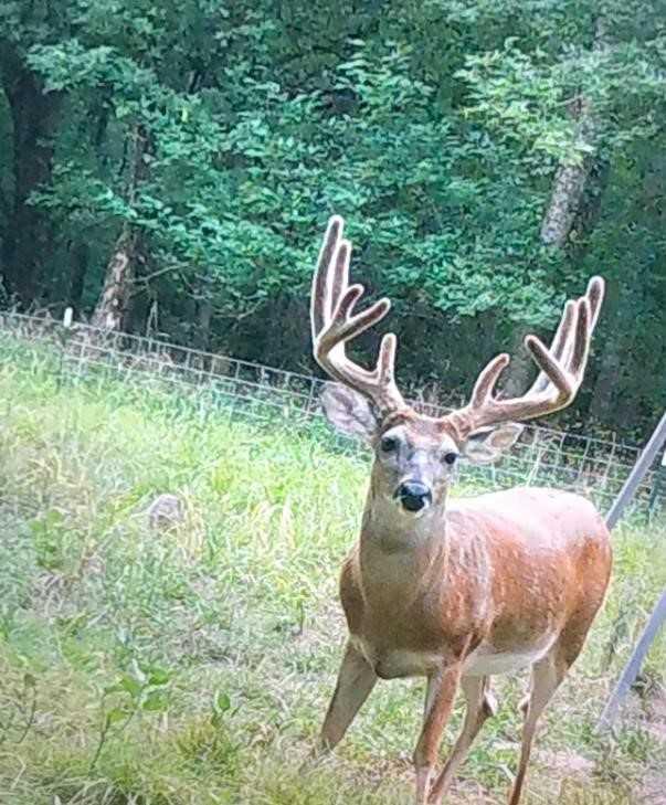 Active   Rut And Strut Hunting Ranch Bentley, OK 74525 13