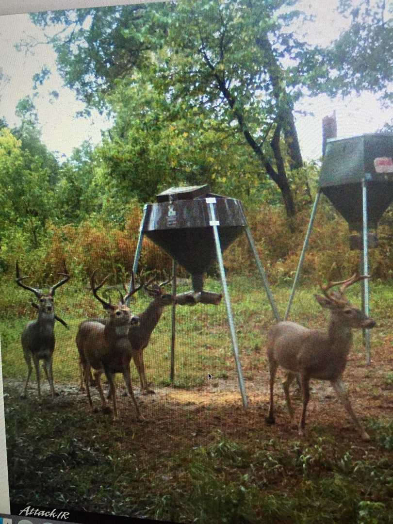 Active   Rut And Strut Hunting Ranch Bentley, OK 74525 12