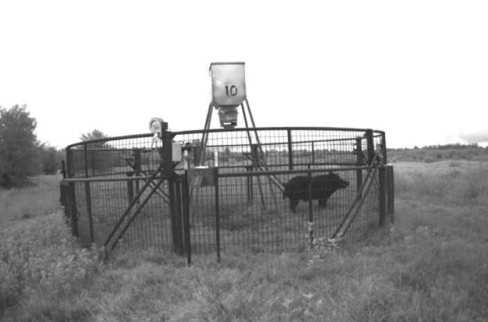 Active   Rut And Strut Hunting Ranch Bentley, OK 74525 16