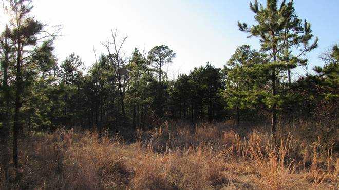 | Kiamichi Wilderness Moyers, OK 74557 4