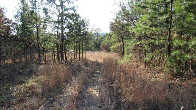 | Kiamichi Wilderness Moyers, OK 74557 6