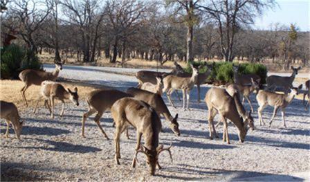 Active | Lot 14 Oak Point Drive Lake Brownwood, Texas 76857 7