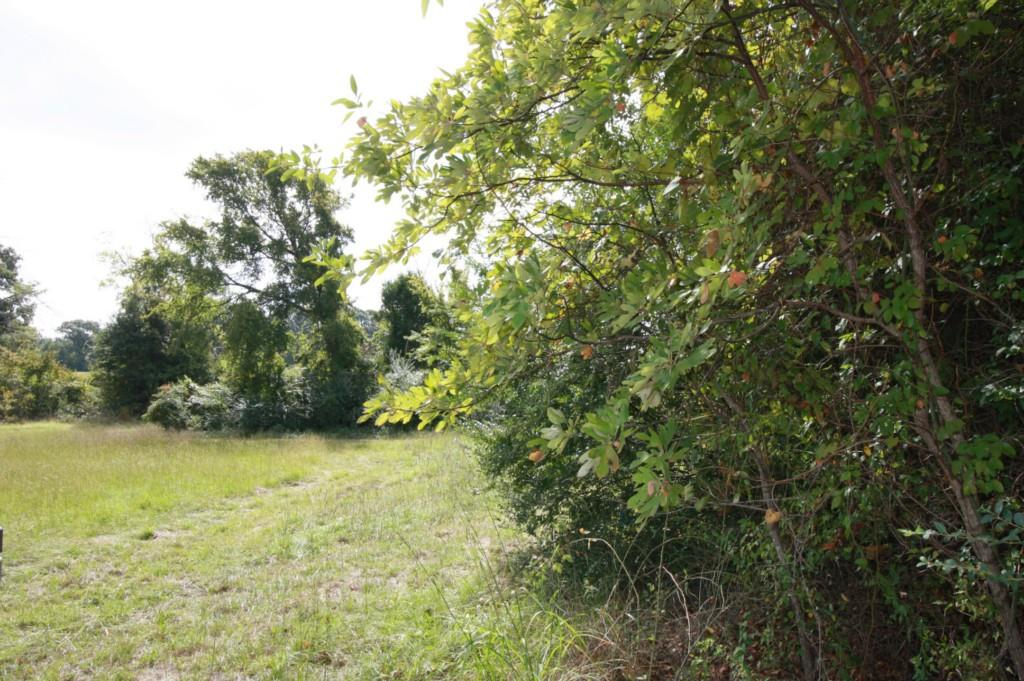 Sold Property | 18 Acres Hwy 19  Canton, Texas 75103 3