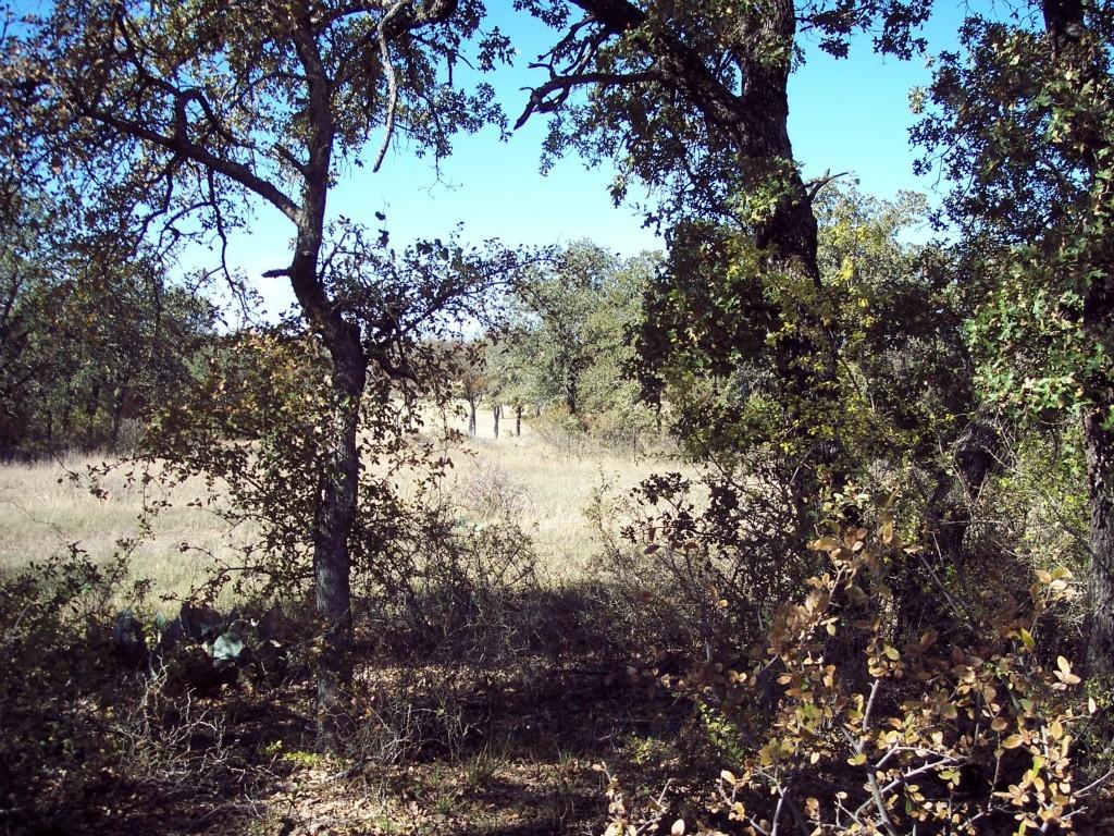 Active | Lot 28 S Sugartree Drive Lipan, Texas 76462 5