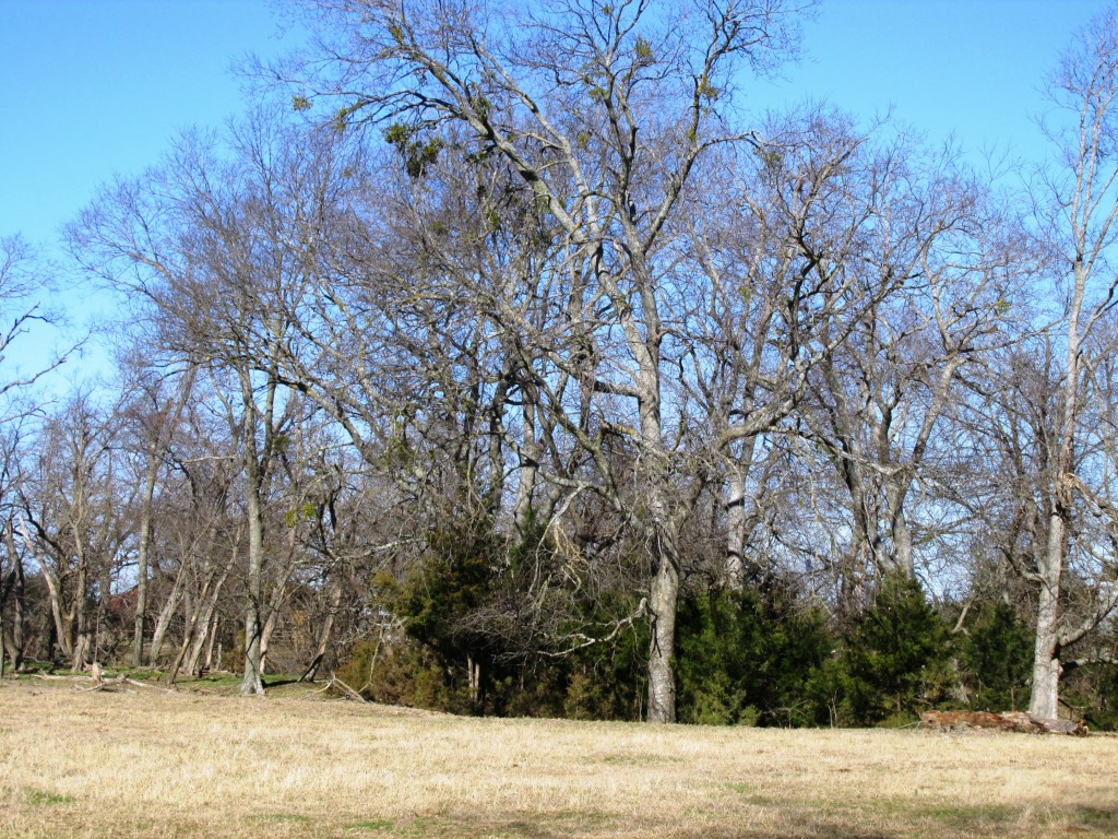 Sold Property | TBD CR 4136  Cooper, Texas 75432 5