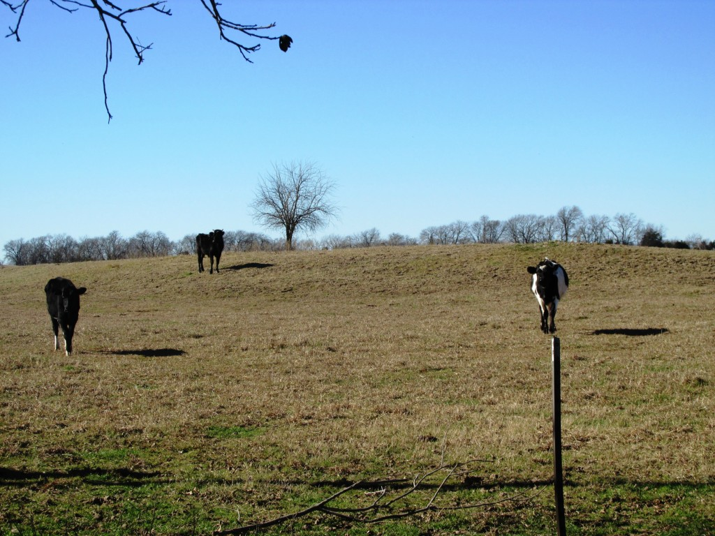 Sold Property | TBD CR 4136  Cooper, Texas 75432 6