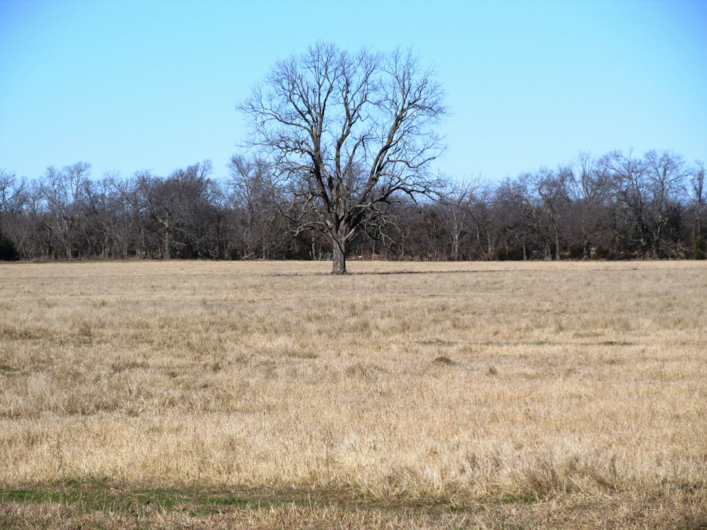 Sold Property | TBD CR 4136  Cooper, Texas 75432 8