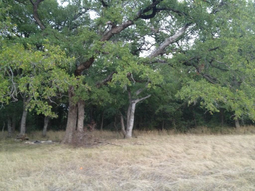 Sold Property | 240 Yaupon Drive Maypearl, Texas 76064 1