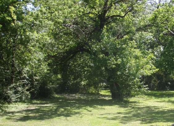 Sold Property | 918 N VIRGINIA  Terrell, Texas 75160 0