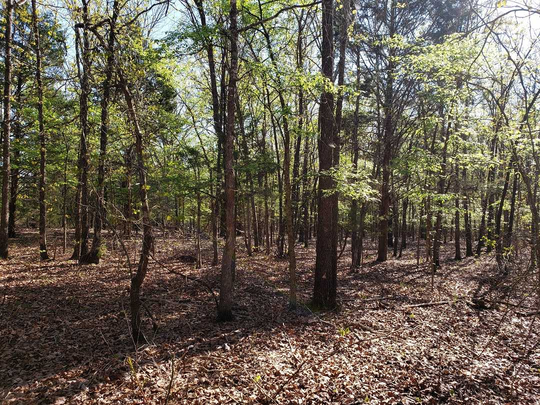 Sold Property | 10 Wooded Acres Antlers, OK 74523 2