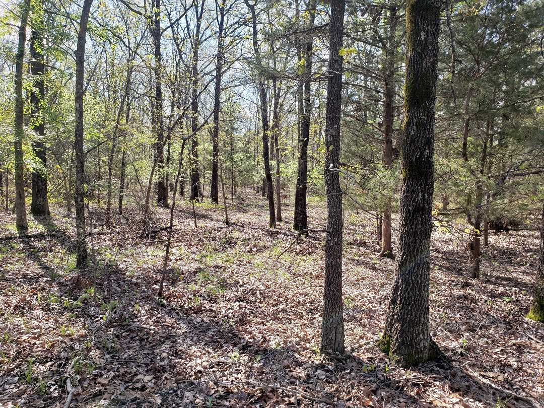 Sold Property | 10 Wooded Acres Antlers, OK 74523 3