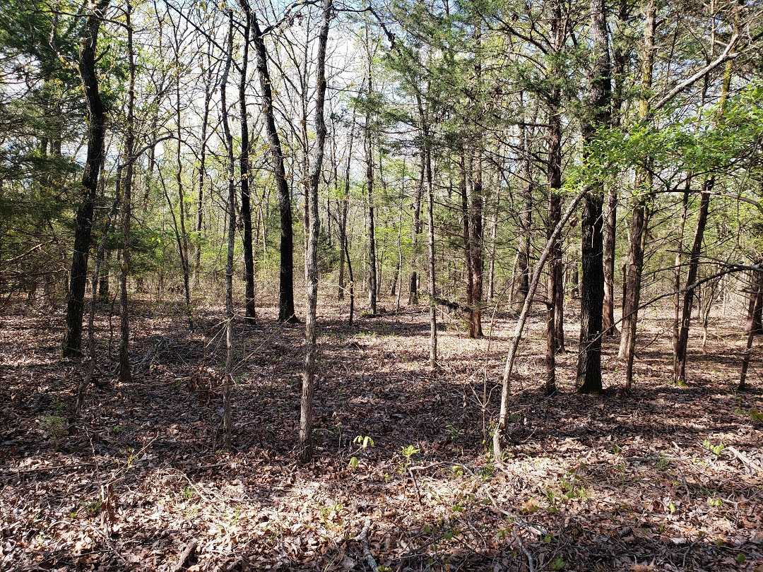 Sold Property | 10 Wooded Acres Antlers, OK 74523 4