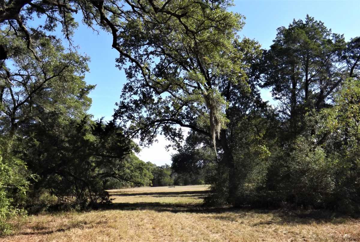 17.5 Acres for Sale in Columbus, TX | 1297-A Frelsburg Rd. Alleyton, TX 78935 3