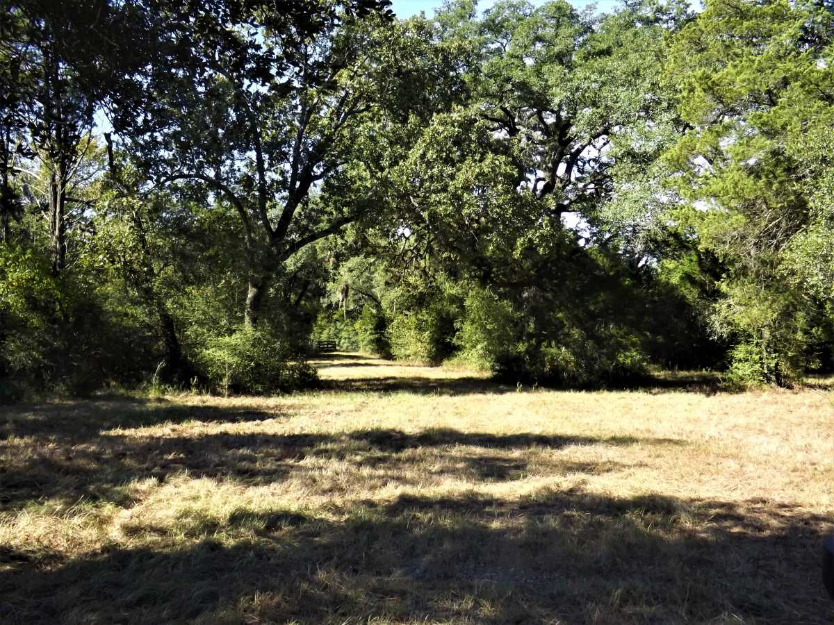 17.5 Acres for Sale in Columbus, TX | 1297-A Frelsburg Rd. Alleyton, TX 78935 4