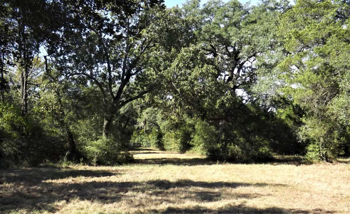 17.5 Acres for Sale in Columbus, TX | 1297-A Frelsburg Rd. Alleyton, TX 78935 13