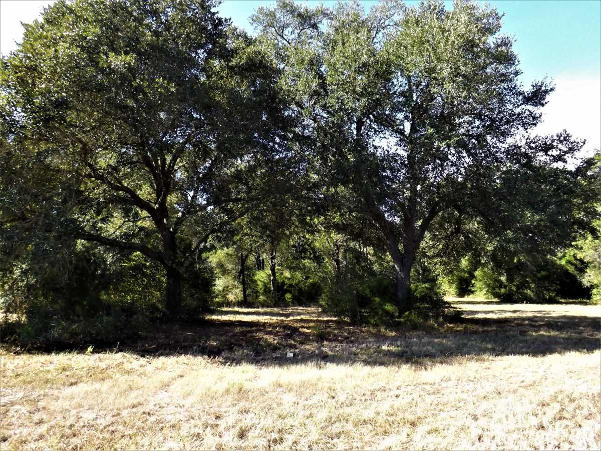 17.5 Acres for Sale in Columbus, TX | 1297-A Frelsburg Rd. Alleyton, TX 78935 5