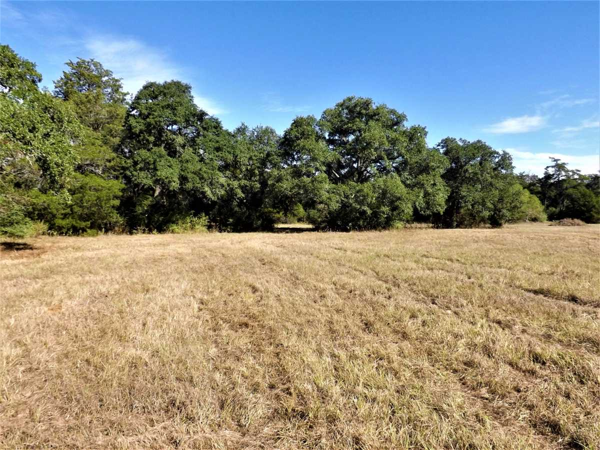 17.5 Acres for Sale in Columbus, TX | 1297-A Frelsburg Rd. Alleyton, TX 78935 7
