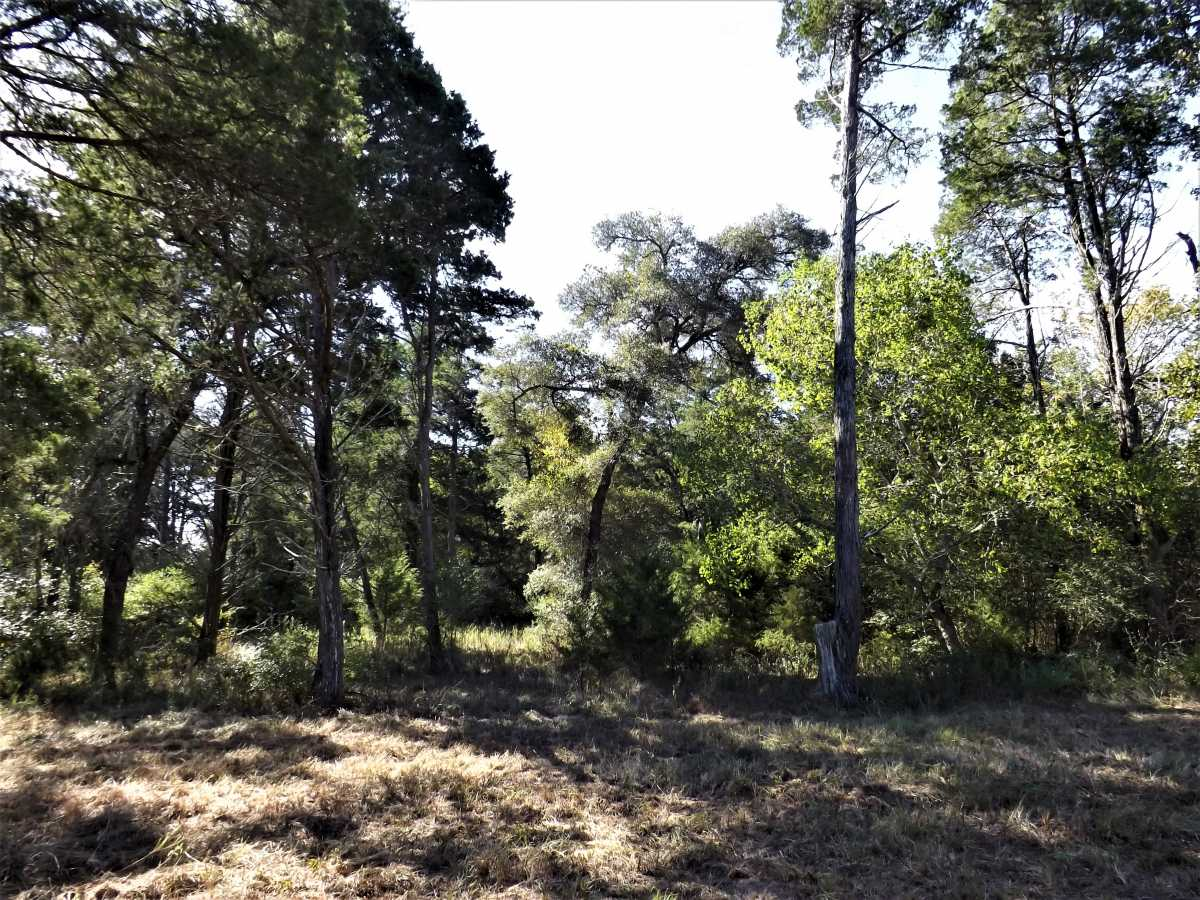 17.5 Acres for Sale in Columbus, TX | 1297-A Frelsburg Rd. Alleyton, TX 78935 10