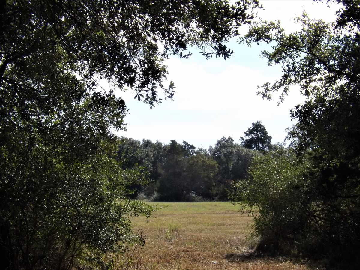17.5 Acres for Sale in Columbus, TX | 1297-A Frelsburg Rd. Alleyton, TX 78935 11