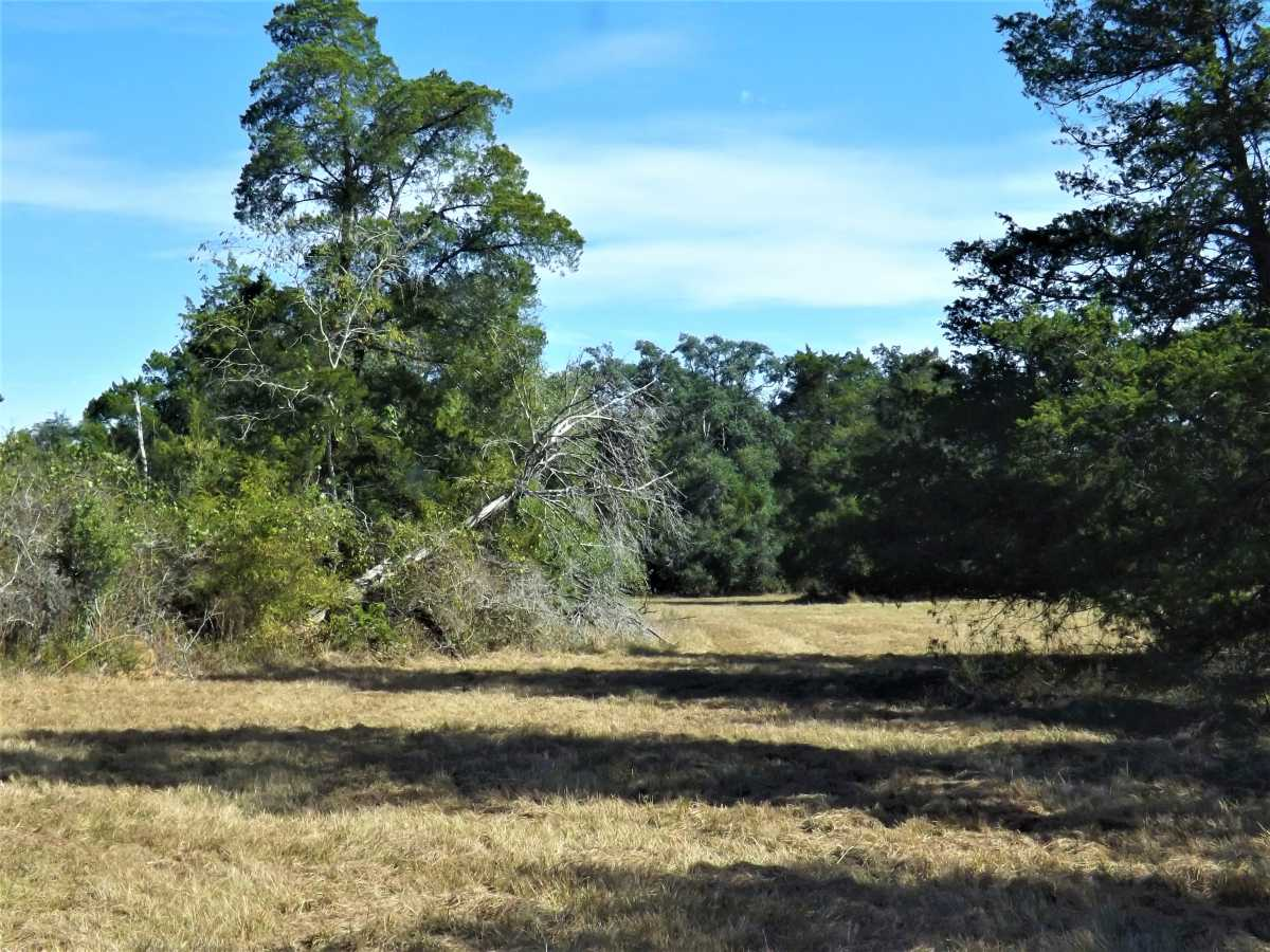 17.5 Acres for Sale in Columbus, TX | 1297-B Frelsburg Rd. Alleyton, TX 77435 6