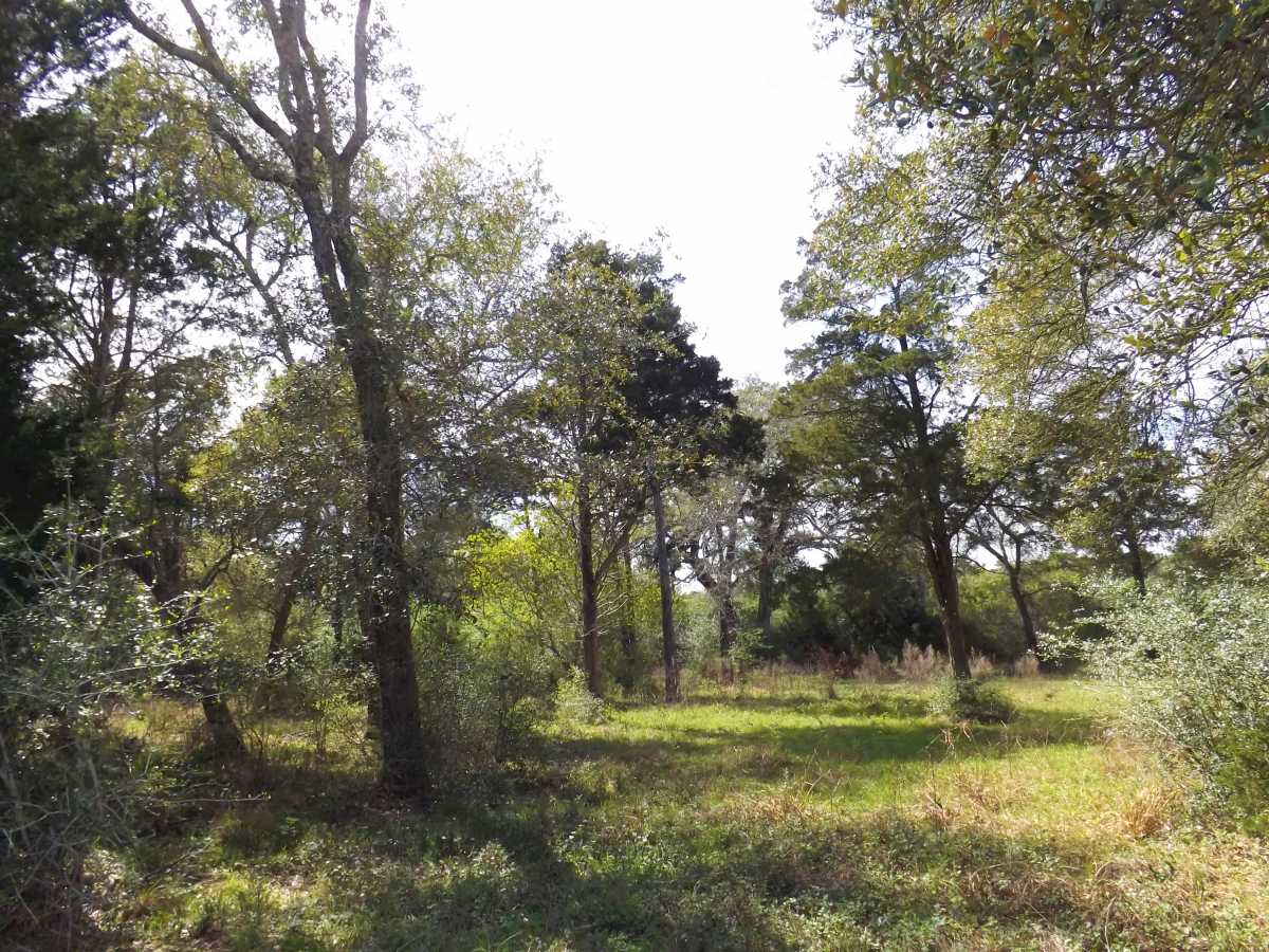 17.5 Acres for Sale in Columbus, TX | 1297-B Frelsburg Rd. Alleyton, TX 77435 7