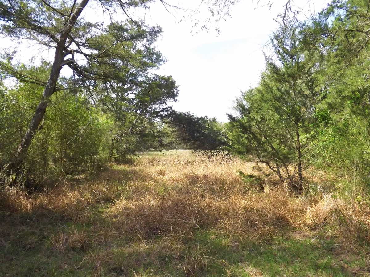 17.5 Acres for Sale in Columbus, TX | 1297-B Frelsburg Rd. Alleyton, TX 77435 11