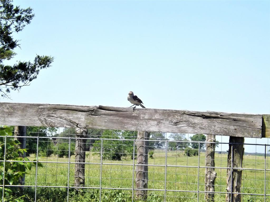 Country Living in Cat Spring on 31+ acres, Farm House.    5677 US Hwy 90 Cat Spring, TX 78933 15