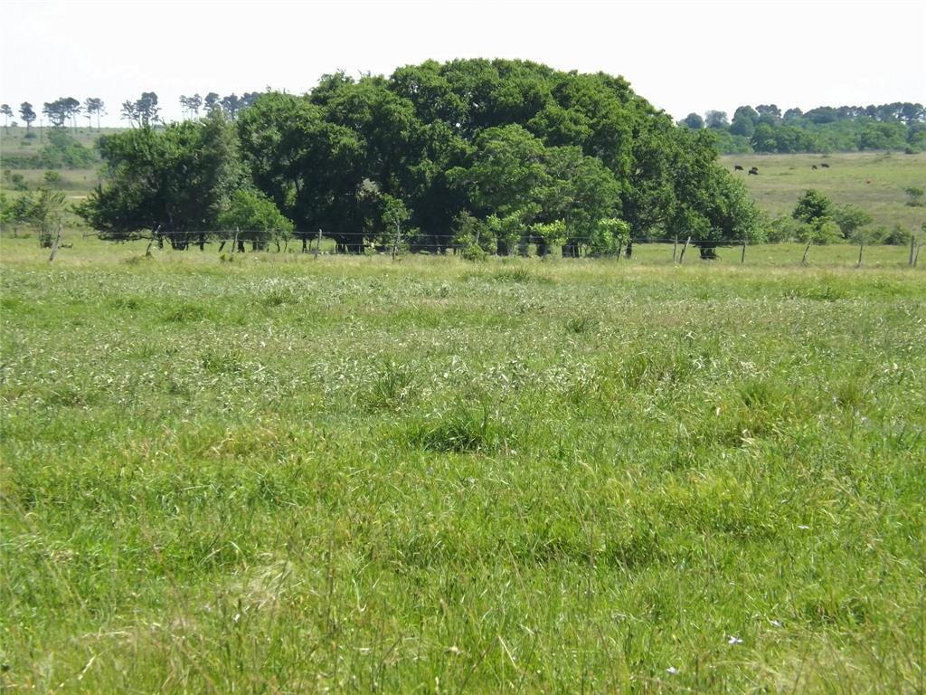 Country Living in Cat Spring on 31+ acres, Farm House.    5677 US Hwy 90 Cat Spring, TX 78933 16