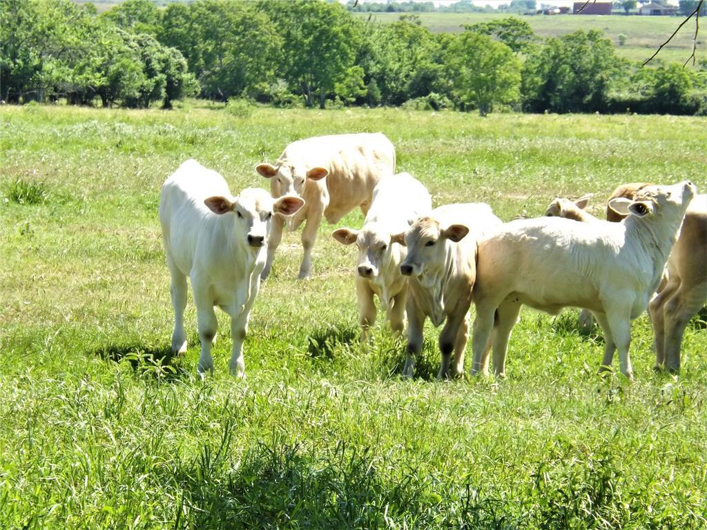 Country Living in Cat Spring on 31+ acres, Farm House.    5677 US Hwy 90 Cat Spring, TX 78933 19