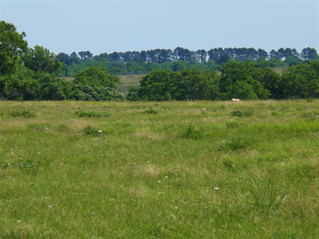 Country Living in Cat Spring on 31+ acres, Farm House.    5677 US Hwy 90 Cat Spring, TX 78933 6