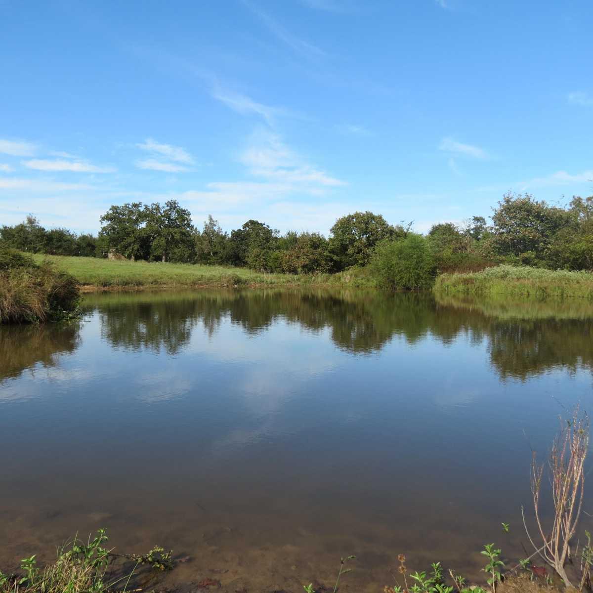 Pending | 4129 Prairie Pond Rd Moyers, OK 74557 40