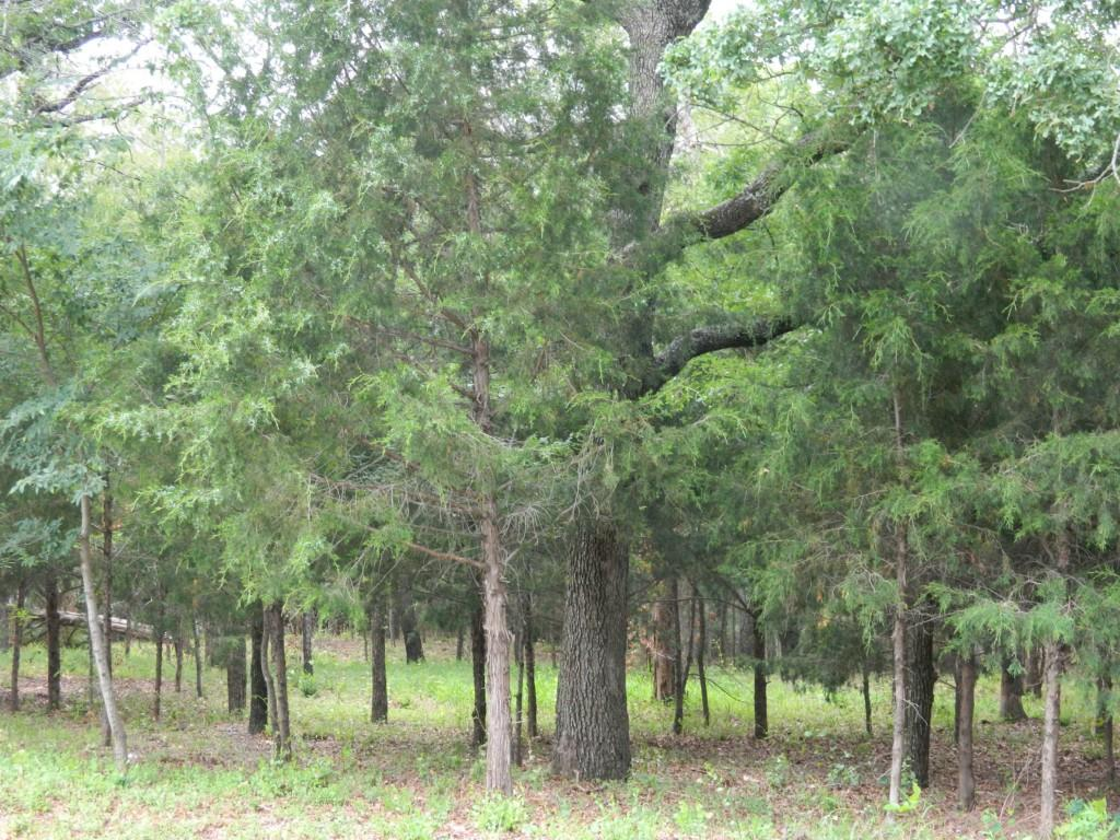 Sold Property | LOT84 DIAMOND POINT Drive Oak Point, Texas 75068 10