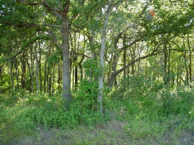 Sold Property | LOT84 DIAMOND POINT Drive Oak Point, Texas 75068 13
