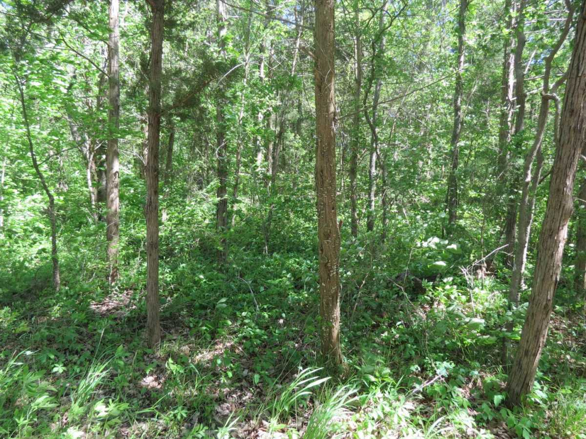 land, ranch, recreational, hunting, oklahoma | #12 Meandering Way Fort Towson, OK 74735 9
