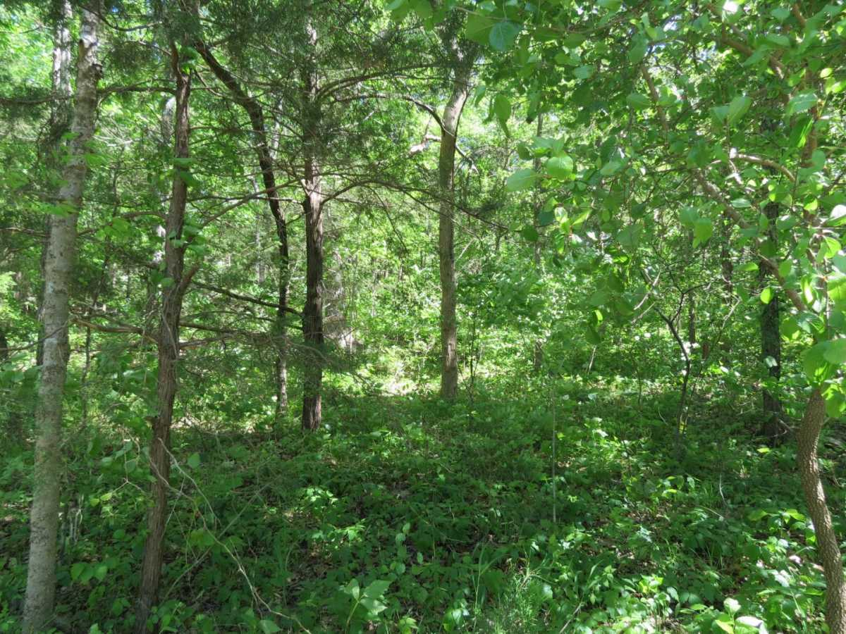 land, ranch, recreational, hunting, oklahoma | #12 Meandering Way Fort Towson, OK 74735 4