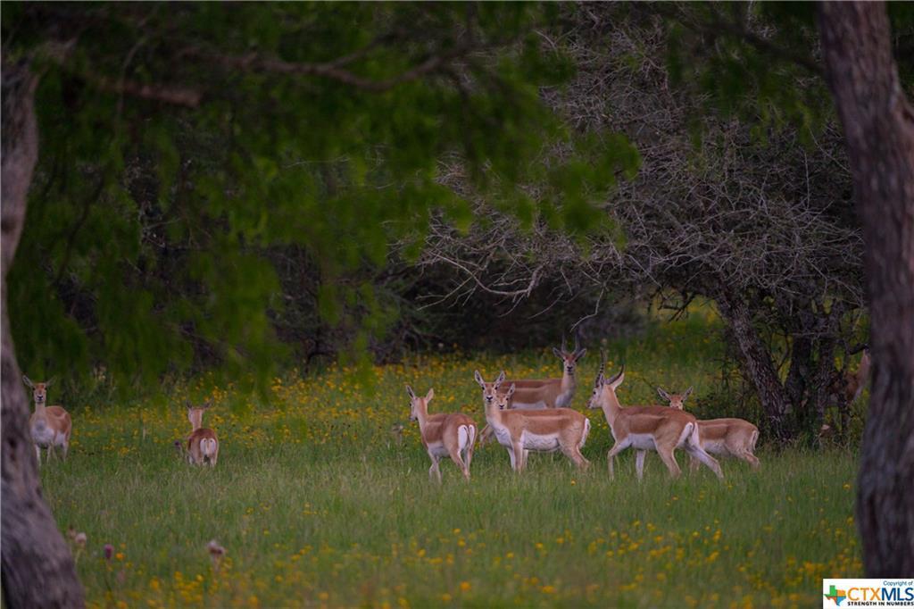 Active | 7084 Friar  Road Cuero, TX 77954 15