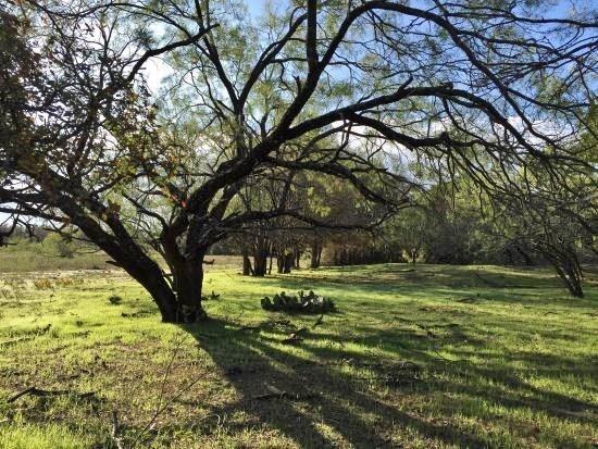 Active | 9200 HERRINGBONE Drive Fort Worth, TX 76131 29