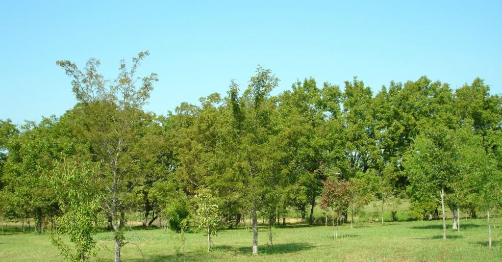 Sold Property | 14 Baybridge  Corsicana, TX 75144 1